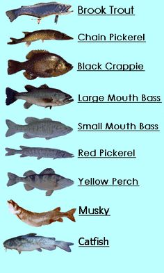 Freshwater on pinterest cichlids freshwater fish and for Nj fishing reports freshwater