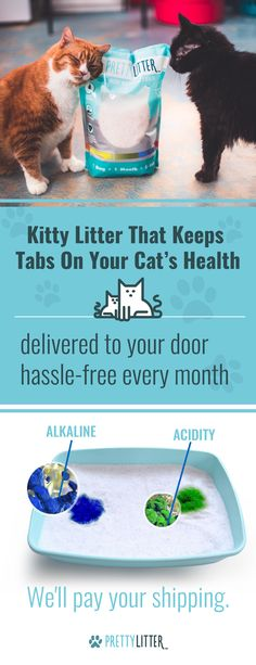 I love this stuff! Pet Care, I Love Cats, Crazy Cats, Cute Cats, Cat Stuff, Catio, Kittens Cutest, Cats And Kittens, Brazil Facts