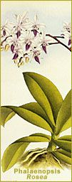 For Orchid Care - Phalaenopsis.. They are really hard to take care of! http://www.beautifulorchids.com/orchids/orchid_care_tips/individual_care/phalaenopsis.html