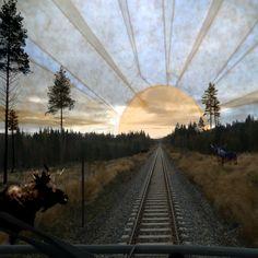 Elg på sporet