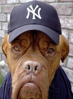 dogs in baseball hats
