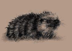 One of my sketch a day drawings Hedgehog  #drawing #hedgehog #http://etsy.me/1rARc0J #sketch