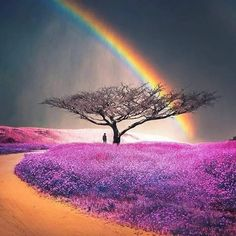 Rainbow from Lorna Rankin Rainbow Magic, Rainbow Sky, Love Rainbow, Over The Rainbow, Rainbow Colors, Beautiful Places, Beautiful Pictures, Rainbow Connection, Rainbow Wallpaper