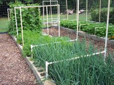 Cinder block raised garden with pvc pipe - use to throw nets over berry bushes? http://gardeningrevolution.com