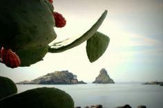 Isola Lachea e faraglione