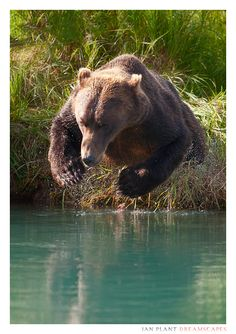 Nature Animals, Animals And Pets, Funny Animals, Cute Animals, Beautiful Creatures, Animals Beautiful, Cute Bear, Big Bear, Photo Animaliere