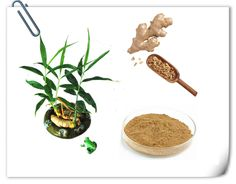 1, Latin Name:  #Zingiber #officinale #Rosc  2, Part used:  Root 3, Active #ingredients: #Gingerols 4, Specification:  #Gingerols 5% HPLC  5, Certificates:  #ISO9001 / Halal / Kosher / HACCP   http://www.apitechina.com/ginger