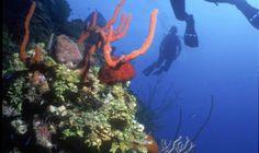 Scuba Diving in St Kitts
