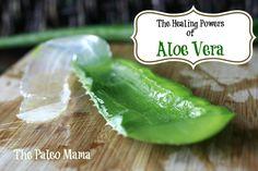 Healing Powers of Aloe Vera & How to Use it at Home @Jackie Godbold @ The Paleo Mama
