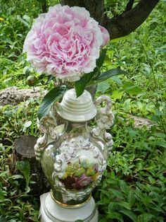 One of my Spring peonies in a vintage vase...