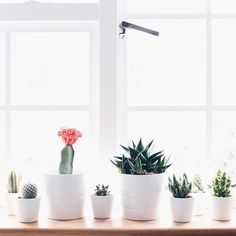 My new cacti (at Oxford, Oxfordshire) Patio Interior, Interior Design, Cactus, Inside Plants, Spa Rooms, Clutter Organization, Tiny Apartments, Flat Ideas, My Room