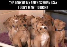 The Look Of My Friends