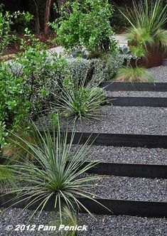"""""""Heading back to the front of the house you see a stair of steel risers and gravel treads leading up to the parking area on the left. A Corten steel box planter steps down the slope and helps define the separation between the garden and the driveway. Small grasses, agaves, and a giant heseraloe (Hesperaloe funifera) are planted directly into the gravel steps!"""""""