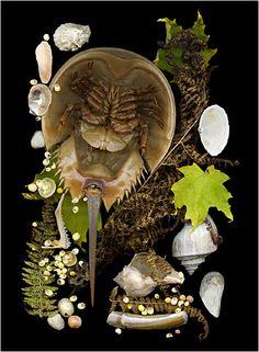 Shoreline Treasures, Scanned Shells, Scanner Photography, Scanography... - Scanner Photography By Ellen Hoverkamp