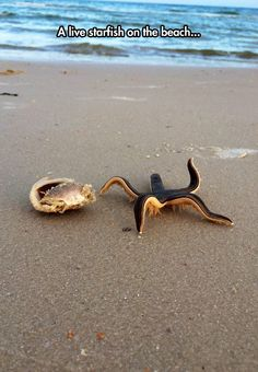 Funny pictures about A Live Starfish On The Beach. Oh, and cool pics about A Live Starfish On The Beach. Also, A Live Starfish On The Beach photos. Underwater Creatures, Underwater Life, Ocean Creatures, Beautiful Sea Creatures, Animals Beautiful, Fauna Marina, Water Animals, Tier Fotos, Sea And Ocean