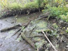 Inland Water Way Near The River Bank                                If you want to see More Click Below.    Also Find us on:  http://hometownvintage.com http://autopartspuller.com http://preppersencyclopedia.com @HomeTownVintage @autopartspuller @preppershowto http://facebook.com/hometownvtg http://facebook.com/AutoPartsPuller