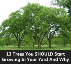 13 Trees You SHOULD Start Growing In Your Yard And Why Trees You SHOULD Start Growing In Your Yard. These trees are known for their carbon storing abilities plus other benefits for the environment. Backyard Trees, Backyard Shade, Landscaping Trees, Front Yard Landscaping, Acreage Landscaping, Outdoor Trees, Outdoor Life, Best Shade Trees, Fast Growing Shade Trees