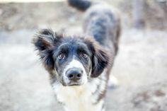 IVAN 💜 10.2.2017 Ivan oli tuotu Glinan tarhalle loppuvuodesta 2016 ja laitettu tyhjään häkkiin, niin ettei kukaan tarhalla käyvä eläinsuojelija tiennyt asiasta. Ivanilla oli vakava peräsuoliprolapsi (peräsuoli noin 10cm ulkona), joka leikattiin hätänä samana päivänä kun koira löytyi tarhalta. Klinikalta…Lue lisää ›