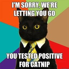 The Absolute Best of the Business Cat Meme - ViraLuck Business Cat Meme, Cat Memes, Funny Memes, Today Meme, Software, You Had One Job, Internet Memes, Morning Humor, Funny Cat Pictures