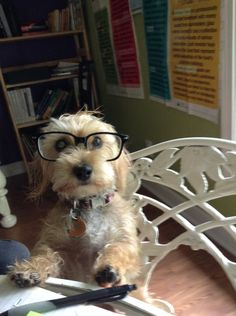 I've Been Going Through Your Quarterly Taxes… A couple of bones won't do as payment.