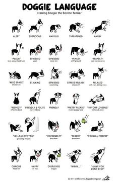 Read your dog's body language.