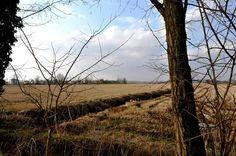 Vegetation on the plain ..