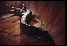 This is the ancestor of Crocodile called Sarcosuchus Imperator