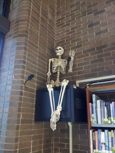 10-24-14: Helping to catch the library mice