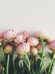 (via Beauties. | Flower (& Plant) Power | Pinterest)