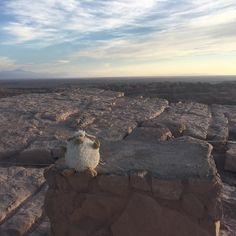 Dennis loving the Atacama Desert  That sky! That landscape  I'm in love.  _____________________________ FOLLOW @travel__creative Tag #travelcreative  _____________________________ #desert #mascot #travel #skyporn #landscape #landscapephotography #landscapeporn #sky #sun #hot #traveldiaries #globetrotter #adventure #igtravel #photooftheday #fun #travelphotography #travelbug