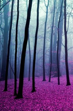"""Magic Forest"" by Elise Enchanted. A late autumn forest scene done in the rose pink, purple and blue bisexual pride colors "" OMG you mean it's intentional? Foto Nature, All Nature, Pink Nature, Amazing Nature, Beautiful World, Beautiful Places, Beautiful Pictures, Beautiful Forest, Magical Pictures"