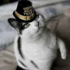 Happy New Year! New Years Resolutions, 2014 Chit Chat and all that… Cute Cats, Funny Cats, Funny Animal, Cat Celebrating, Cool Cat Trees, Suki, Owning A Cat, Cat Hat, Pet Costumes