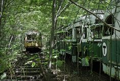 A trolley graveyard: Matthew, 35, began his journey to document abandoned sites a decade ago while researching the decline of the state hospital system
