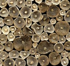 Horticultural Art - 35929 mushrooms
