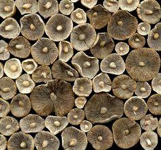 mushrooms -horticultural art