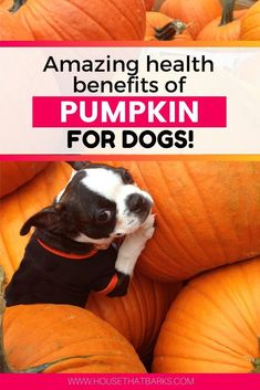 Amazing health benefits of pumpkin for dogs. diarrhea, constipation, for dogs, Diy Dog Treats, Homemade Dog Treats, Dog Treat Recipes, Dog Food Recipes, Homemade Food, Dog Upset Stomach, Dog Pumpkin, Dog Nutrition, Doodle Dog