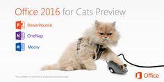 Eindelijk een aangepaste versie van Office voor katten!
