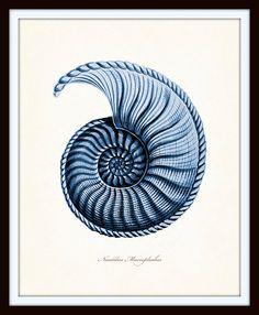 Indigo Blue Nautilus Shell Print Set Ernst Haeckel Giclee by BelleMerGraphics | Etsy
