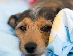 Prevenção é a melhor forma de evitar a leishmaniose visceral canina – #AgitoSP