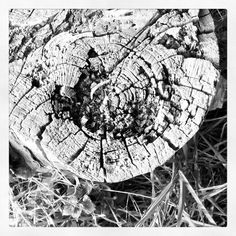 0x38a: Moudrý pařez / Wise stump (7) Renaissance, City Photo, Poetry, Instagram, Poetry Books, Poem, Poems