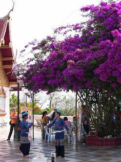 Wat Phra That Doi Suthep - Chiang Mai, Thailand