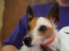 Adopt Charm, a lovely 2 years Dog available for adoption at Petango.com. Charm…