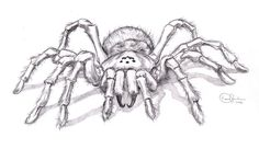 Realistic spider drawing