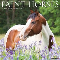 Known for their athleticism and fine dispositions, paint horses by breed requirement come in any combination of white and any other equine colors including black, bay and chestnut. January To December, International Holidays, Willow Creek, Most Beautiful Horses, Cute Horses, Horse Photography, Paint Horses, Equestrian, Art Reference