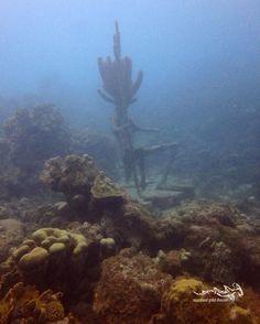 Visibility clearing up ...  #tauchen #fun #diving #scuba #scubadiving #duiken #curacao #relaxedguideddives