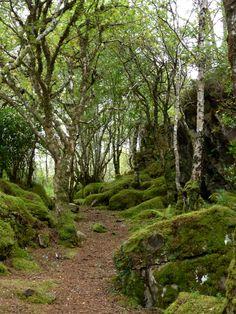 Plockton, Highlands, Scotland, Copyrights Val Moliere, Sept 2013