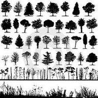 De quel arbre êtes-vous? Recherchez votre date de naissance et vous trouverez votre arbre... Etonnant, vous verrez... 23 déc. au 01 janv. Pommier 02 janv. au 11 janv. Sapin 12 janv. au 24 janv....