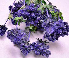 Thistle Blueberry