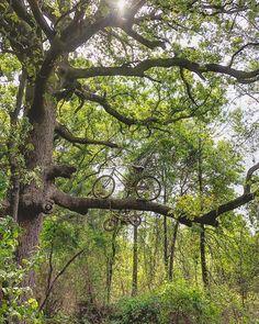 Get off the beaten path... Photo taken in Tyler Texas by Vance Freeman (@vpfree). #texas #easttexas #pineywoods #texasforesttrail