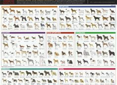Dogs Breeds by American Kennel Club Wallpaper W, Wallpaper Stickers, Wall Stickers, Dog Breeds Pictures, Dog Fails, Terrier Breeds, Dog List, Different Dogs, Cat Breeds